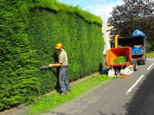 a man performing a hedge trimming service for a big wall of hedge tree with his tree care tools